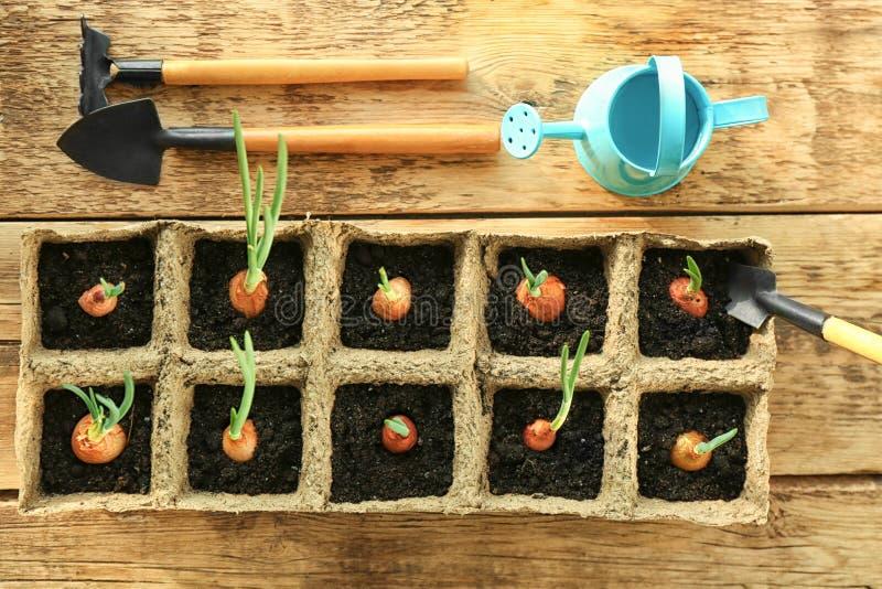 Växtodling med trädgårds- hjälpmedel arkivfoton