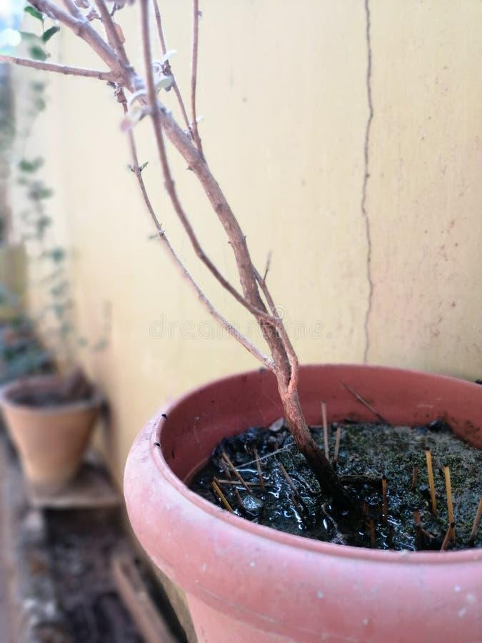 Växtport och vattnet arkivfoto