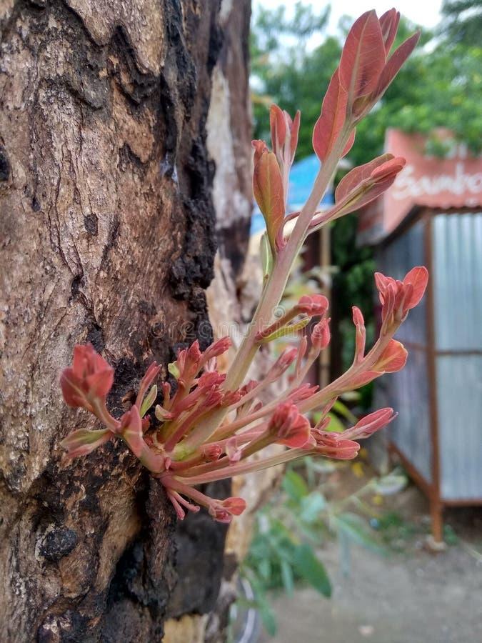 Växtregenerering från cutted träd arkivfoto