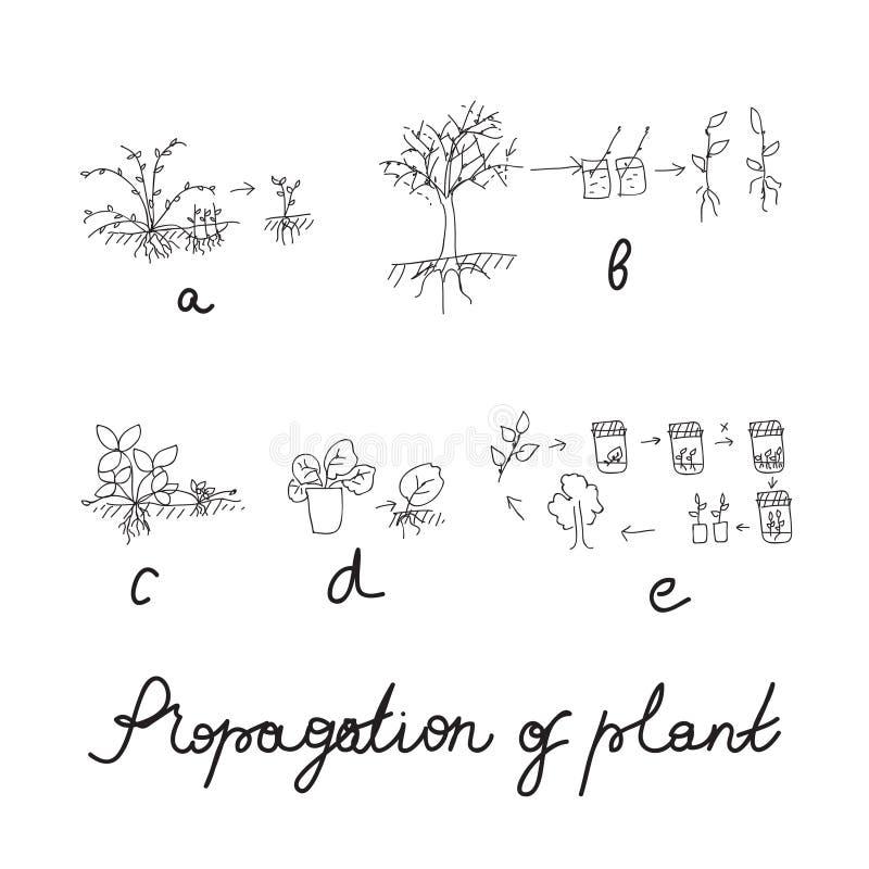 Växtreproduktion eller förökninguppsättning royaltyfri illustrationer