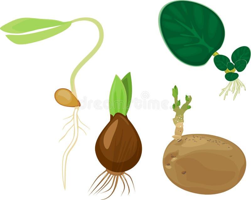 Växtreproduktionsuppsättning royaltyfri illustrationer