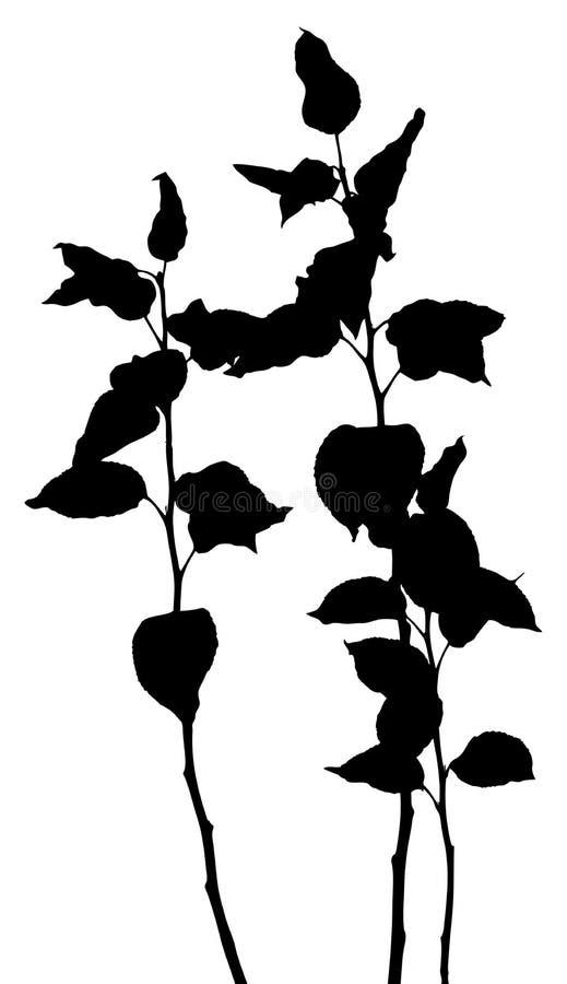 växtsilhouettesvektor vektor illustrationer