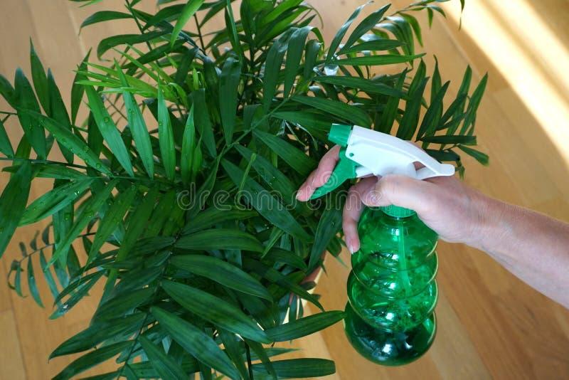 Växtskydd med kvinna hand med grön plastflaska med vätska för sprutning och skydd av hushåll och skötsel fotografering för bildbyråer