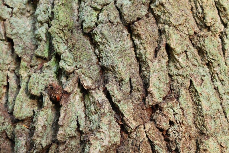 Växtstemen texturerar den trätreestammen royaltyfri foto