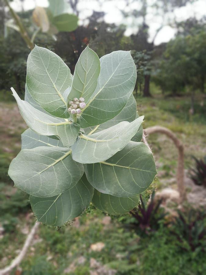 Växttillfångatagande arkivbilder