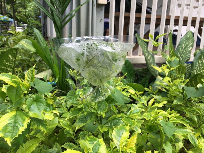 Växttranspiration royaltyfria foton