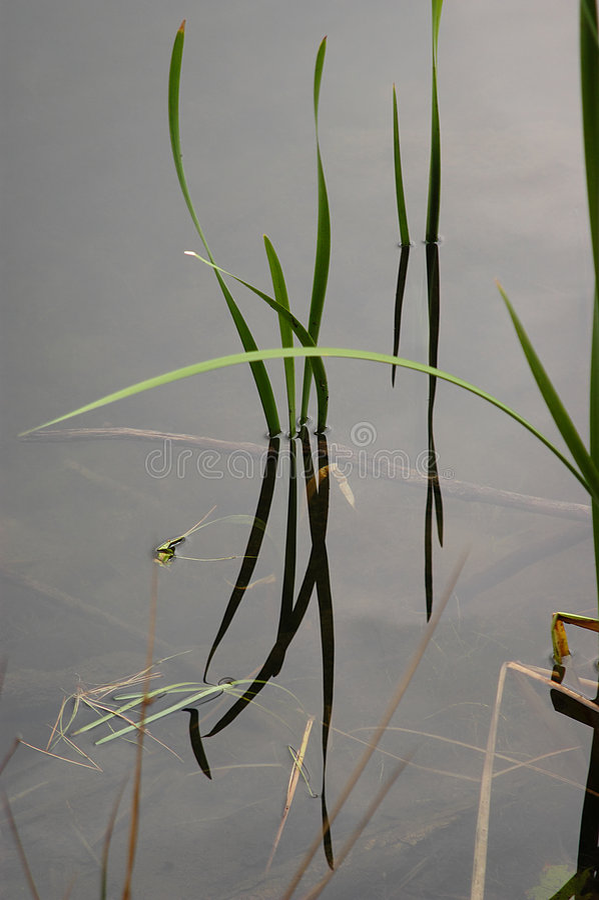 Växtvatten Royaltyfria Bilder