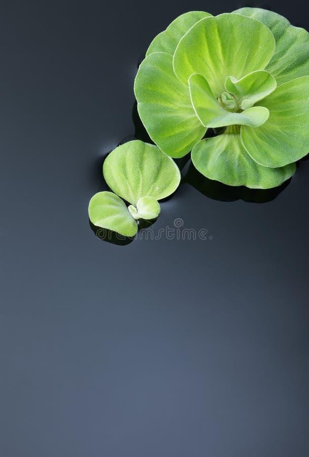 växtvatten arkivbild