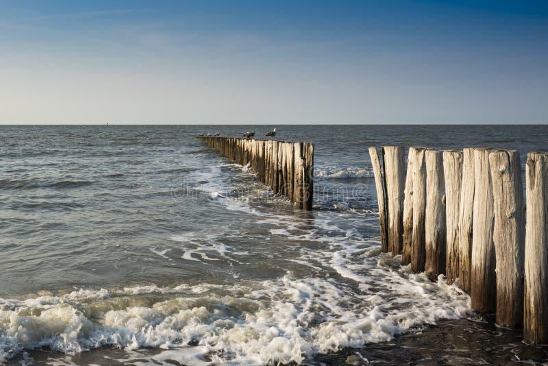 Vågbrytare i Nordsjö, dåliga Cadzand, Holland royaltyfri foto