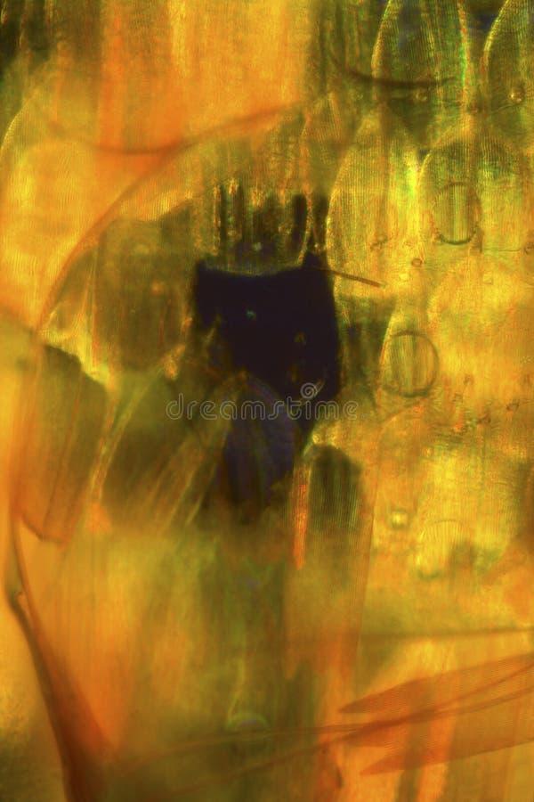 Vågen från en mal påskyndar i en abstrakt micrograph arkivbilder