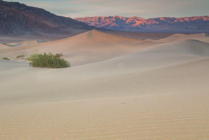 Vågor av sand överst av dyerna Soluppgång Öken i Mesquite F royaltyfria foton