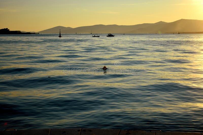 Vågor och krusningar på havsyttersidan i solnedgång royaltyfri bild