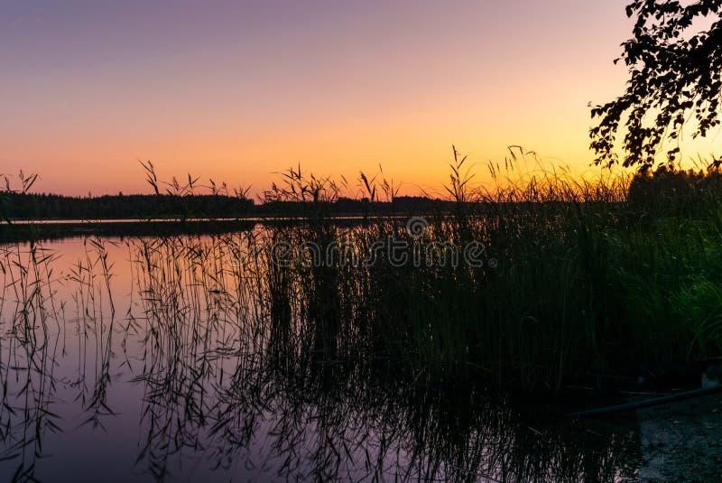 Vågor och rottingar på kusterna av Saimaa sjön i Finland på solnedgången i sommar - 1 royaltyfria bilder