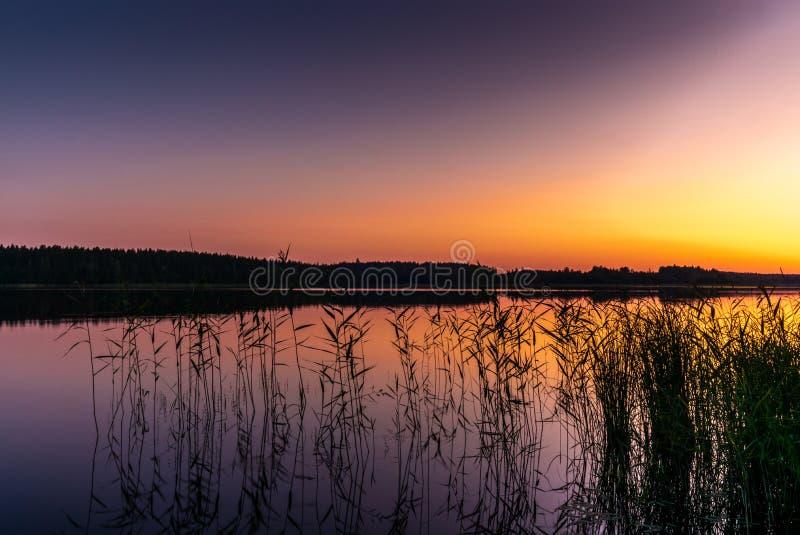 Vågor och rottingar på kusterna av Saimaa sjön i Finland på solnedgången i sommar - 3 royaltyfria foton