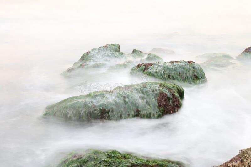 Vågor på havsgräs vaggar arkivbilder