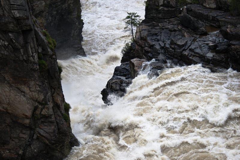 våldsamt vatten för fall royaltyfri bild