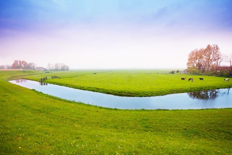 Våräng i Nederländerna arkivfoto