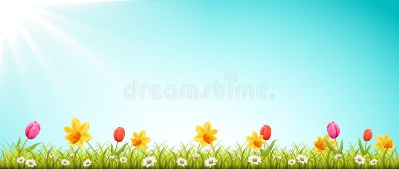Våräng med blommor och solvektorn royaltyfri illustrationer