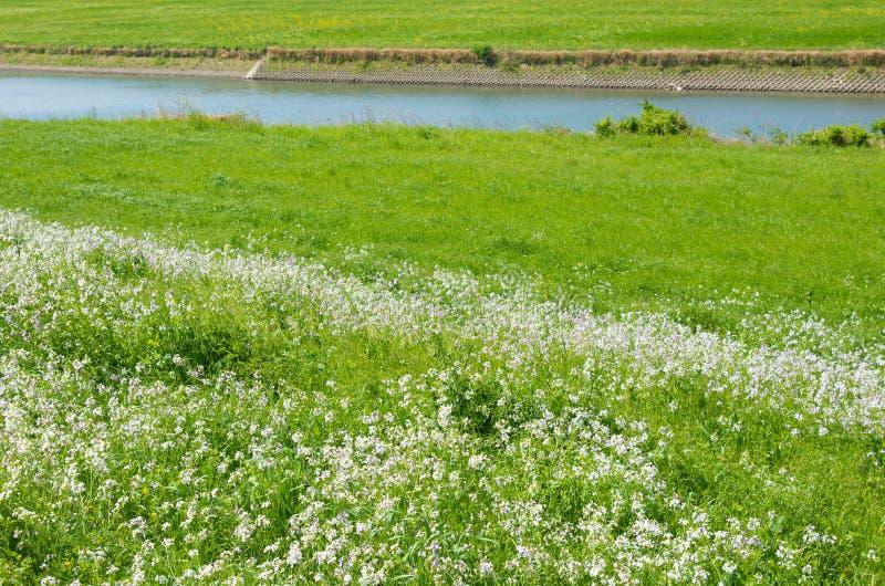 Våräng och flod royaltyfri bild