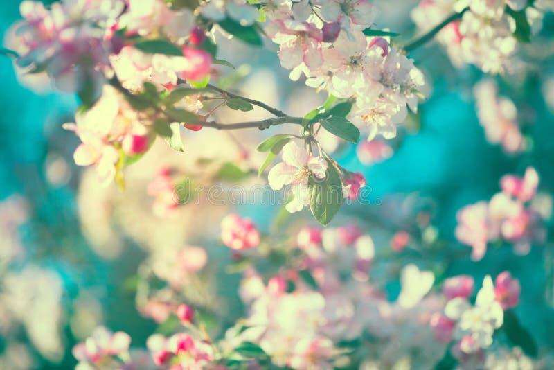 Våräppleblomning över blå himmel arkivbilder