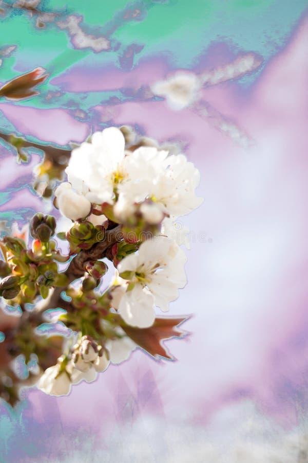 Vår Apple träd i blomning fotografering för bildbyråer