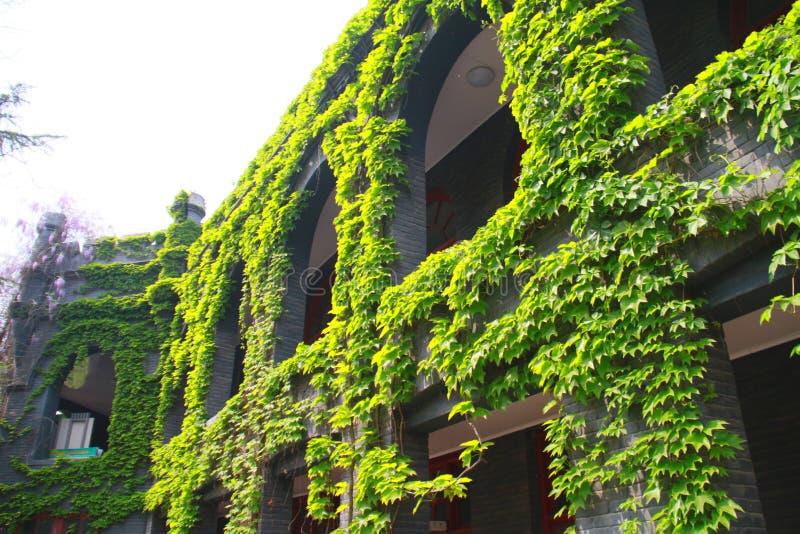 vår av luhemellanstadiet i tongzhouområdet, beijing, porslin arkivbilder