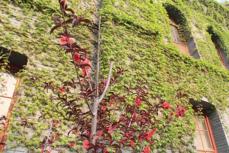 vår av luhemellanstadiet i tongzhouområdet, beijing, porslin royaltyfria foton