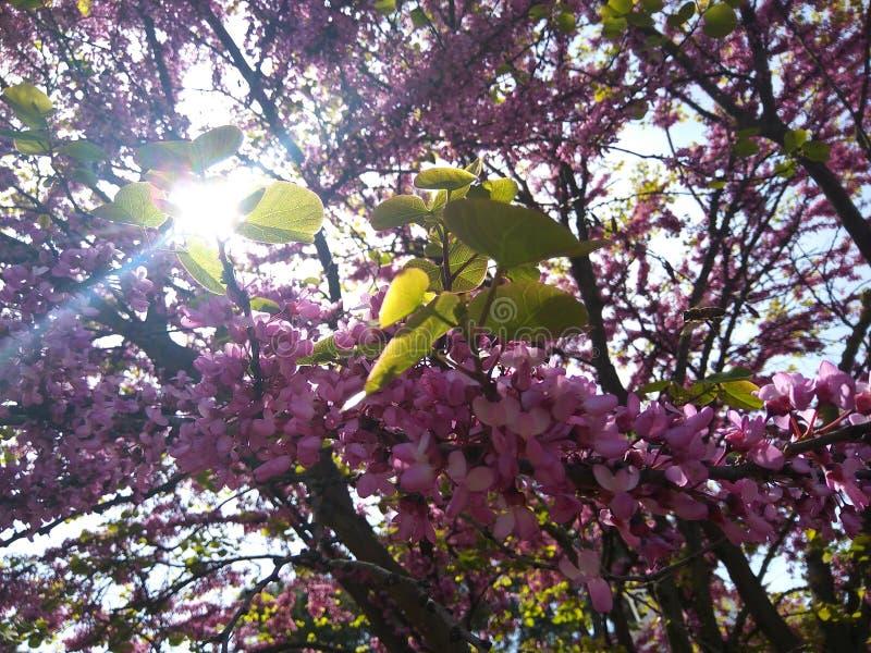 Vår blommor, värme, Gelendzhik royaltyfri bild