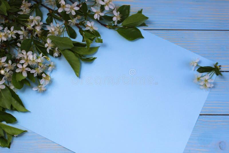 Vår blommor, vit, bakgrund, blomma, blomning, träd, himmel, kronblad som isoleras, foto, filial, blom, natur, rosa som är grön, a arkivfoton