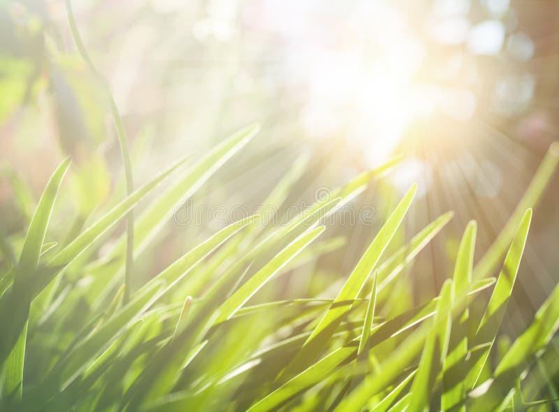 Vår- eller för sommarabstrakt begreppnatur bakgrund med ängen för grönt gräs royaltyfri foto