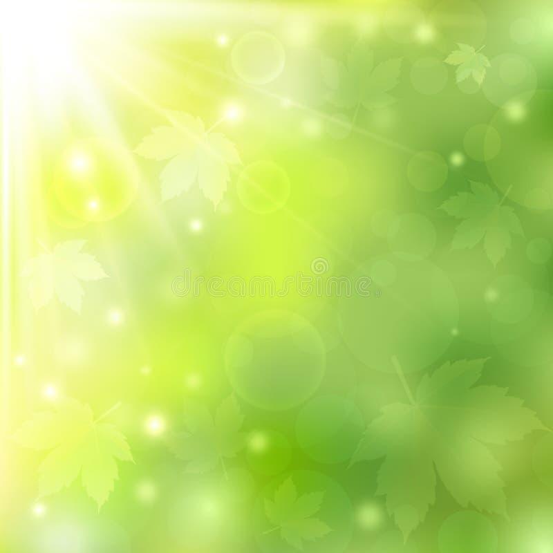 Vår eller solig naturlig grön bakgrund för sommar med bokehljus och lönnlöv vektor illustrationer