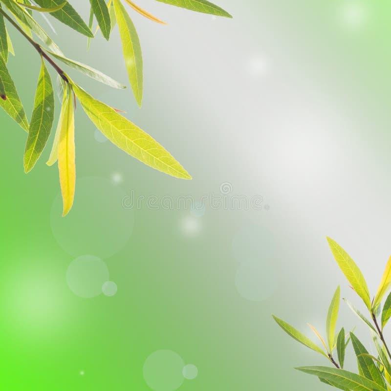 Vår- eller sommarabstrakt begrepp arkivfoto
