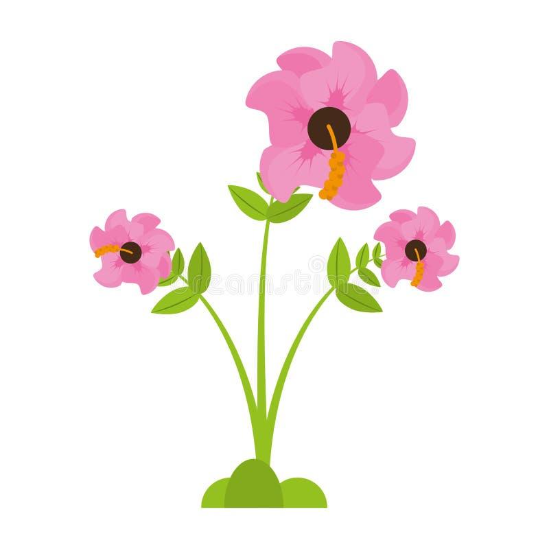 vår för pelargonblommasäsong stock illustrationer