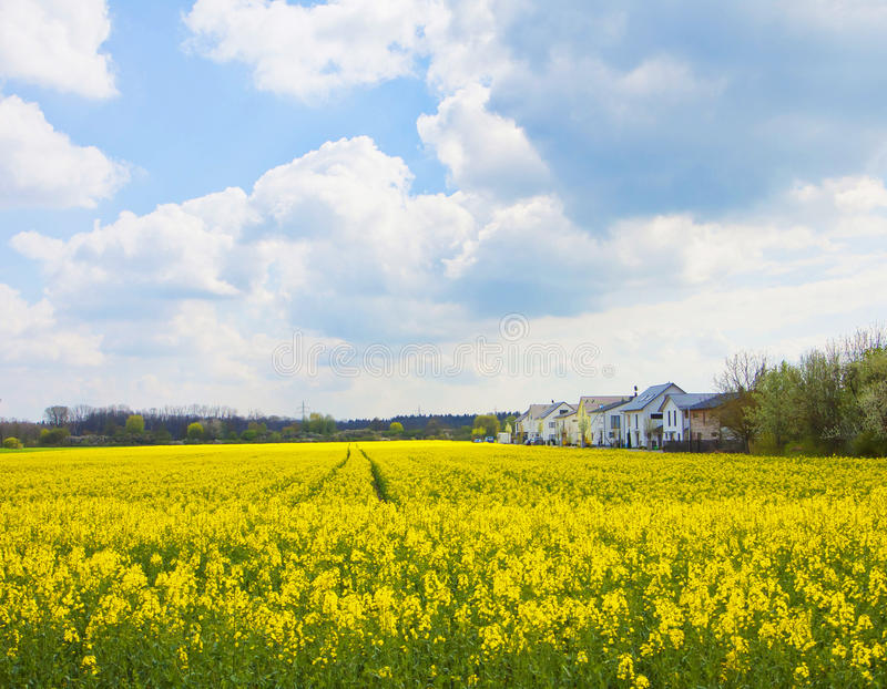 Vår i Bayern, hus i mitt av gula fält av arkivbilder