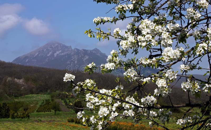 Vår i det norr Kaukasuset royaltyfri foto