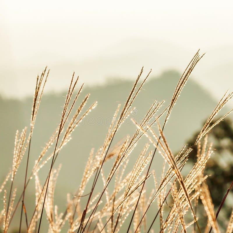 Vår i morgonen, soluppgång som skiner på lösa blommor med dagg på ett bergmaximum, bergskedja gjorde suddig bakgrunder royaltyfri foto