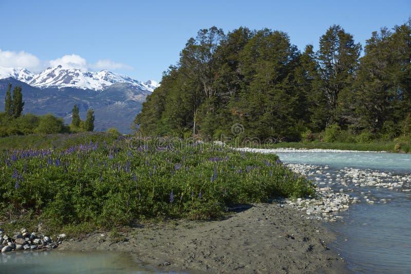 Vår i Patagonia, Chile arkivbild