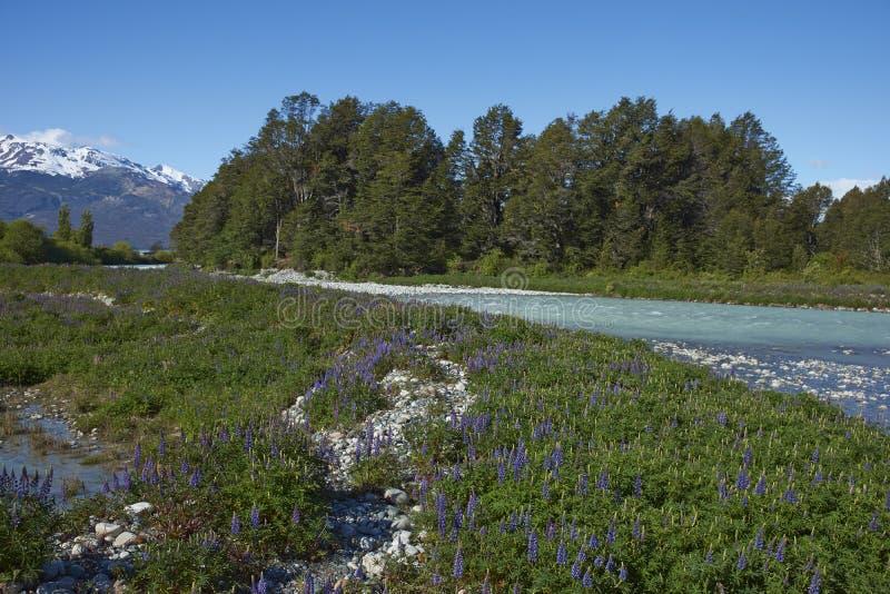 Vår i Patagonia, Chile arkivbilder