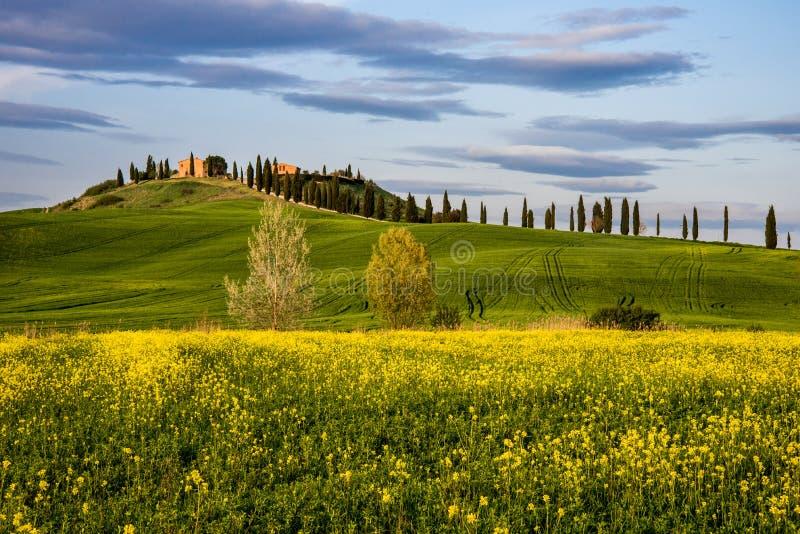 Vår i provencen av Siena, Tuscany royaltyfri foto