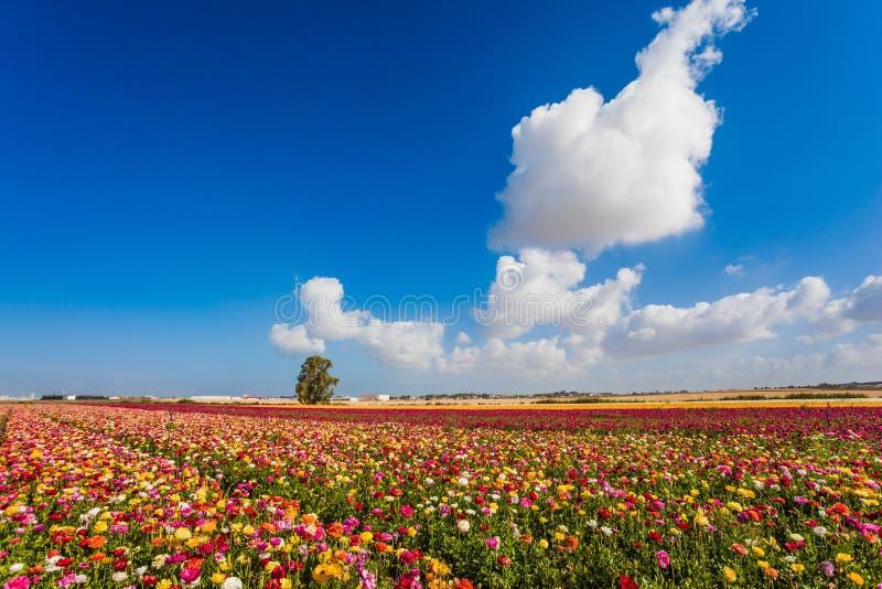 Vår i söderna av Israel royaltyfri bild