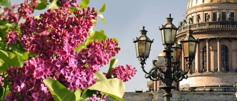 Vår i St Petersburg Helgon Isaac Cathedral med lila blommor, St Petersburg, Ryssland royaltyfria foton