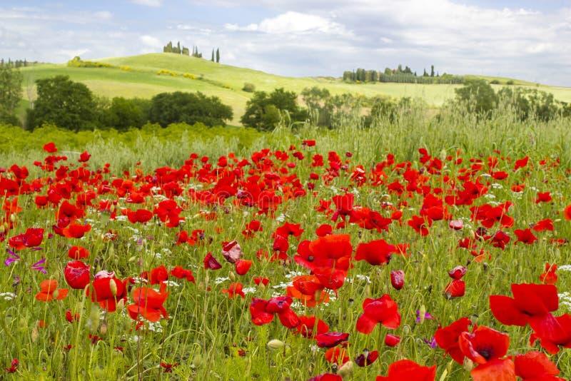 Vår i Tuscany royaltyfri bild