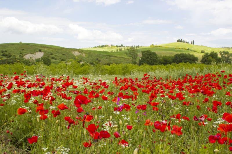 Vår i Tuscany royaltyfri fotografi