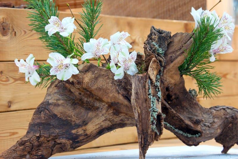 Vår Ikebana, japansk blom- ordning royaltyfria foton