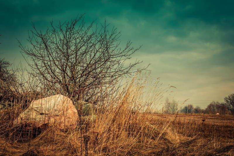 vår lantligt landskap för höst Stenblock och torrt gräs runt om ett litet kalt träd i fältet fotografering för bildbyråer