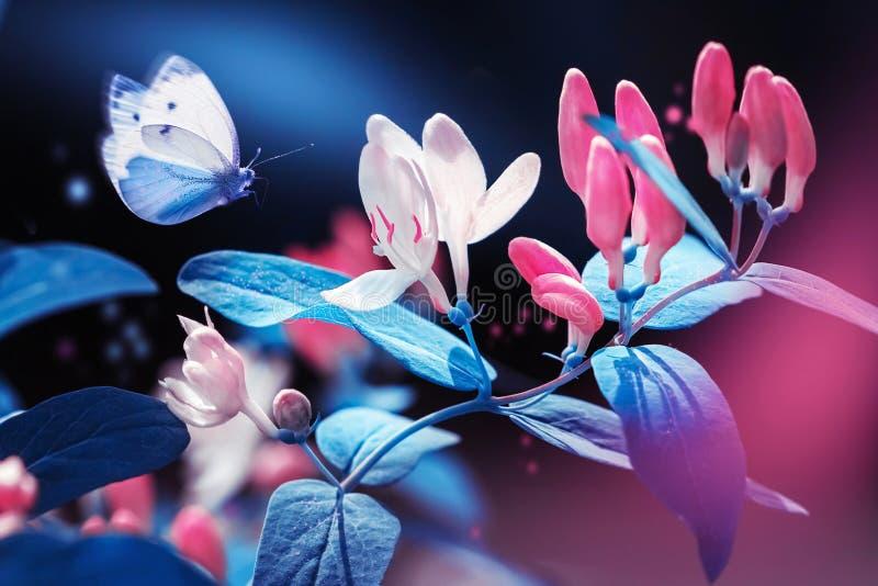Vår och naturlig bakgrund för sommar Härlig blå fjäril på en bakgrund av den rosa trädgården för blommor och för knoppar på våren royaltyfri bild