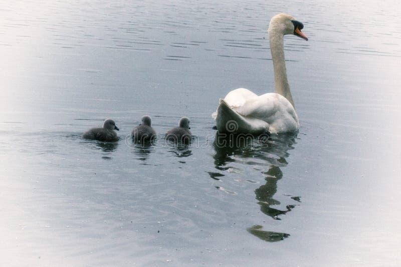 Vår på Hosehill sjön, Berkshire arkivbilder