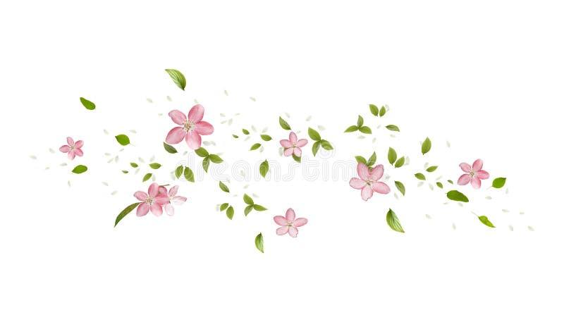 VårApple-trädet blomstrar, singelblommor och kronblad vektor illustrationer