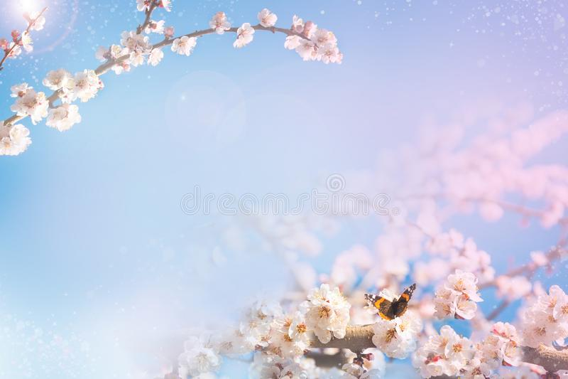 Vårbakgrund med en blomningfilial Fjäril på en blomma royaltyfri bild