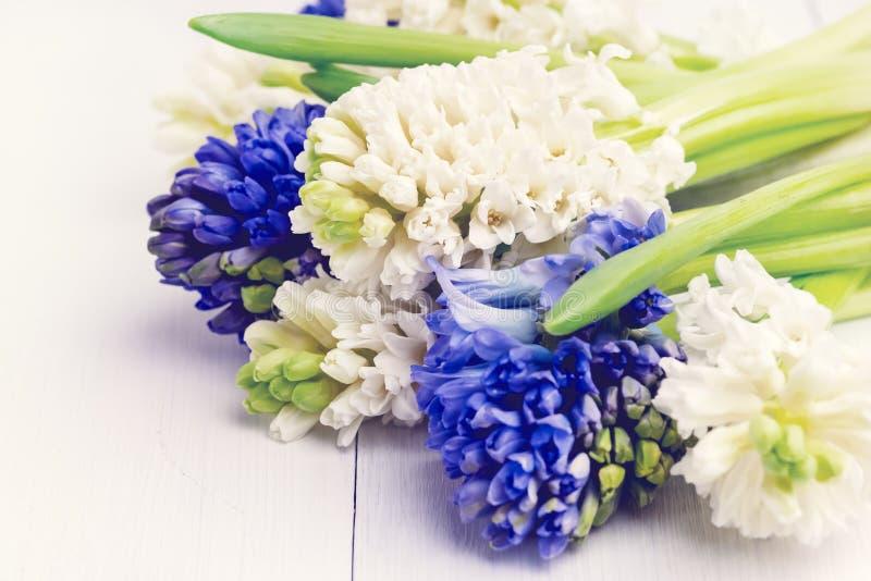 Vårbakgrund med hyacintbakgrund med våren blommar upp buketten av vit- och blåtthyacinter på ett vitt bakgrundsslut fotografering för bildbyråer